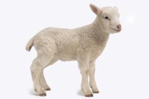 271902-lamb