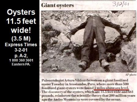 giant-oysters
